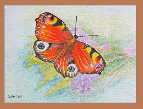 Coloured Pencil Art Butterfly