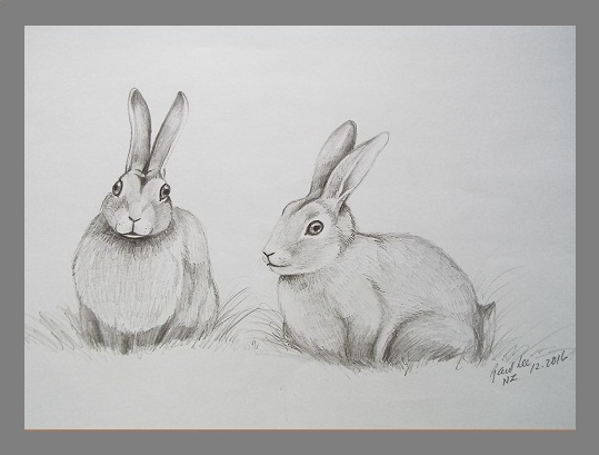 Pencil Drawing Gallery 3