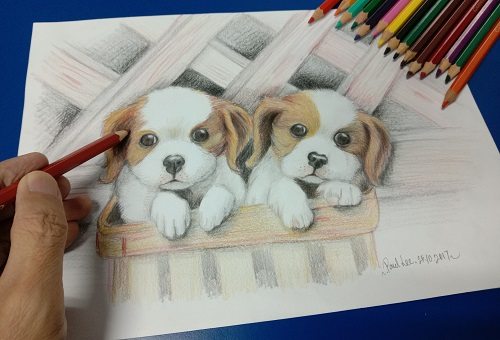 Coloured Pencil Puppies