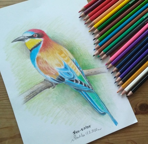 Coloured pencils - Bee Eater