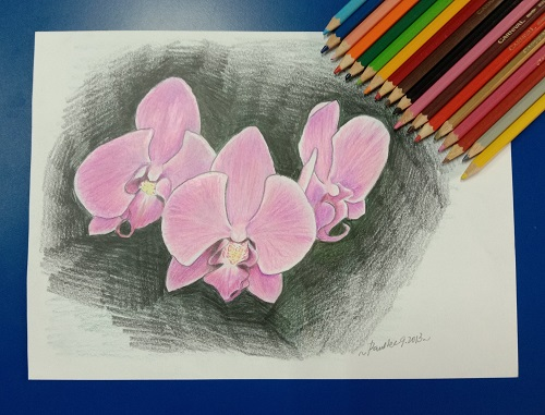 Coloured Pencil Orchid